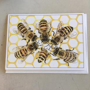 Honeybees - Crane Creek