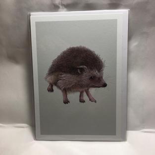 Hedgehog on Mint Sage - Notes & Queries