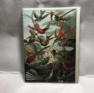 Haeckel Hummingbirds - Notes & Queries