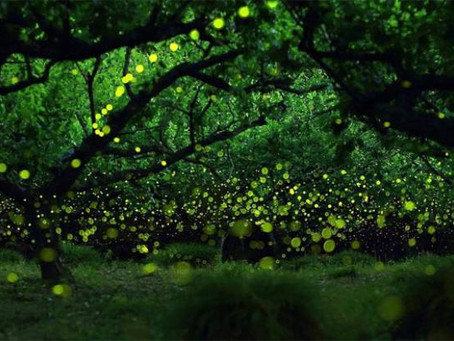 Luces de Tlaxcala ¡Lánzate y enamórate de este fenómeno natural!