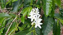 SulawesiOrgRantekarua.jpg