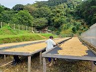Panama-Boquete-Kotowa-Mandarina1.jpg