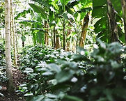 NicaraguaJinotega.jpg