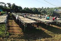 Ethiopia-Dara1-Sidama2Wash.jpg
