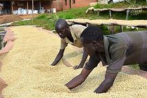 Burundi-Incuti-Kayanza-Fully-Washed3.jpg
