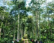 Colombialossantos5Typica.jpg