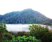 Sulawesisapanminanga4.jpg