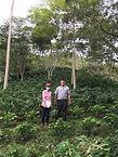 HondurasCopanFinca-Santa-Rosita.jpg