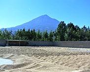 GuatemalaRFAmedina22-1.jpg