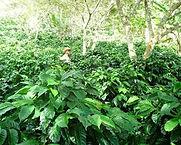 Hondurascerroazul2.jpg