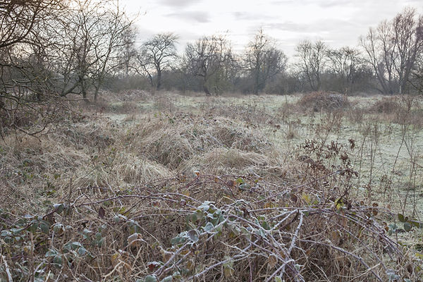 Winter savanne 1.jpg