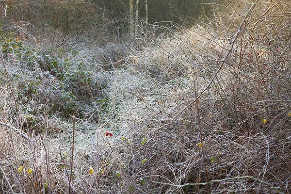 Winter savanne 3.jpg