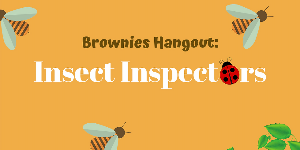 Brownie Hangout: Insect Inspectors