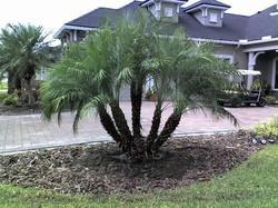 Material fan palm