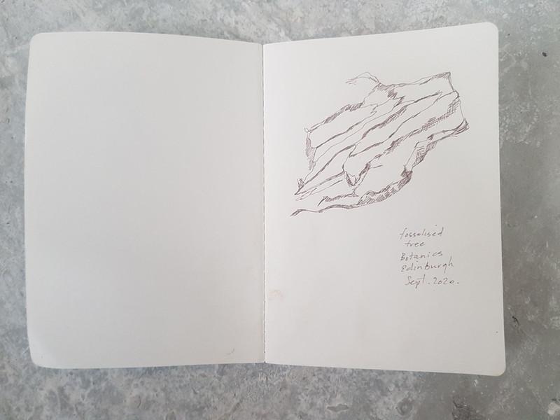 Drawing of fossilised tree, 2020