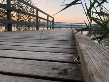Hallwilersee: Detailaufnahme an einem wunderschönen Morgen