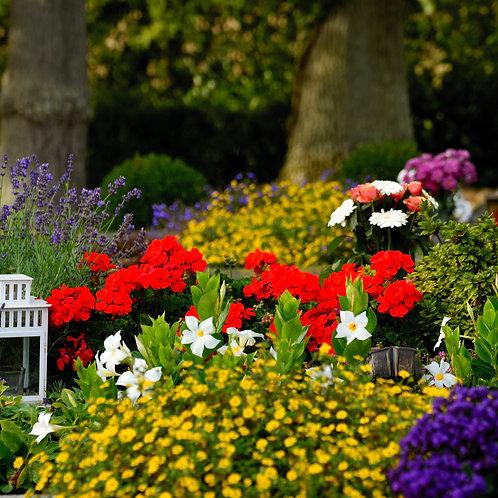 Kopie von Blumen