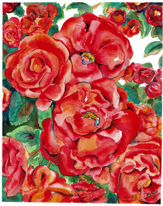 oregon series red roses.jpeg