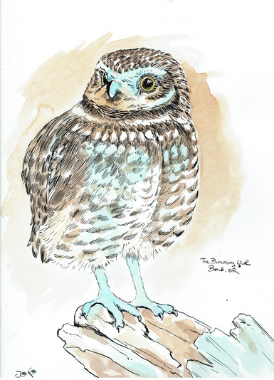 oregon series burrowing owl.jpeg