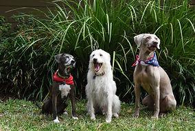 Dog Pic Website.JPG