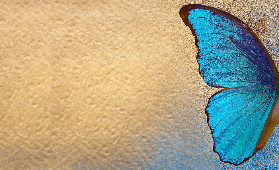 Butterfly Wing on Gold-2.jpg