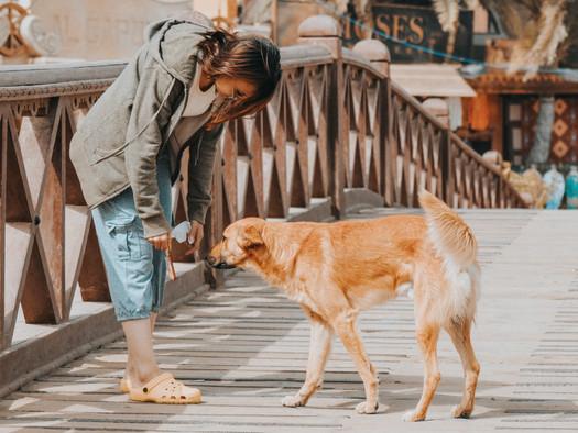 Warum Dein Tier Dein bester Coach sein sollte... Was wir von unseren Tieren lernen können (Teil 1)