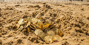 how to find gold on the nearest beach with a treasure metal detector