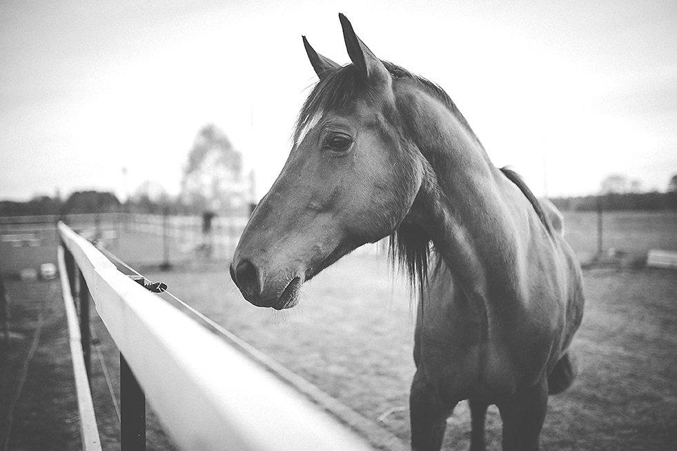 Animal brown horse_edited.jpg