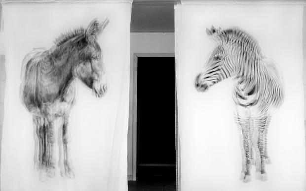 Donkey and Zebra Pair