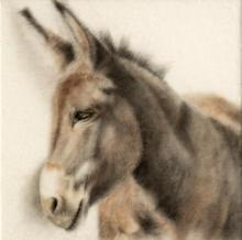 Donkey Study