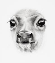 Young Deer Detail