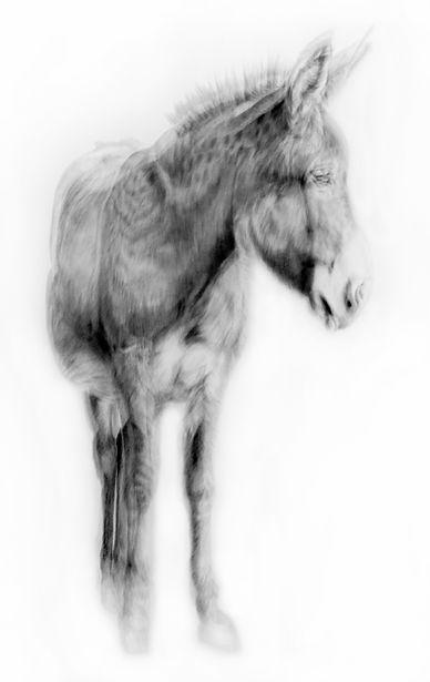 GWoodman_Donkey_2021.jpg