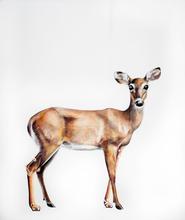Deer Console