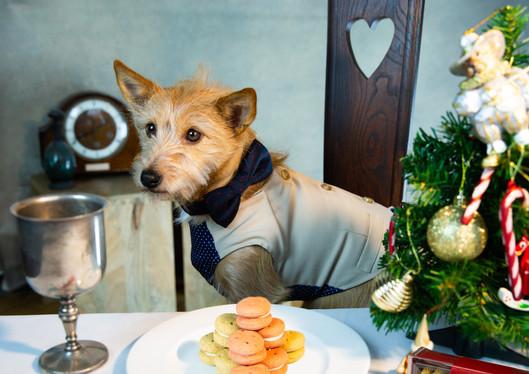Tesco dog treat macaroon Christmas photoshoot for Tesco