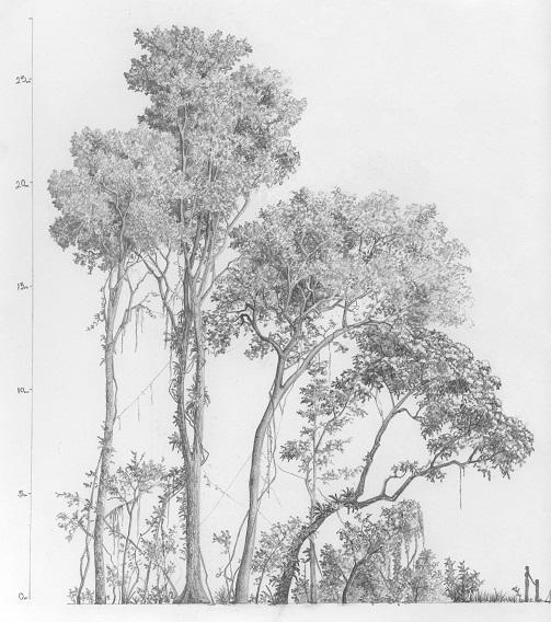 Perfil selva mediana