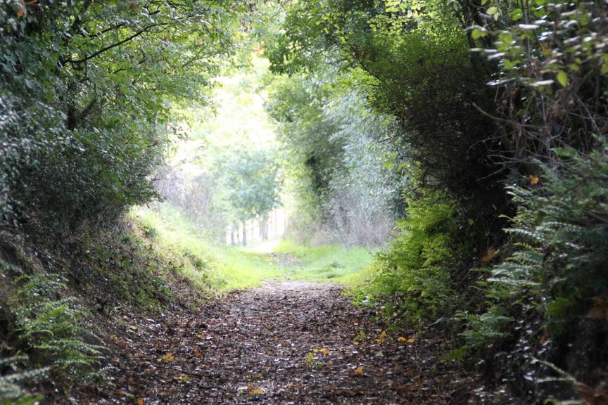 Chemin des Menhirs_5_resize.JPG