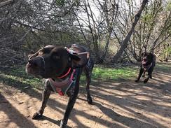 ON THE JOB! •_•_•__#dog #dogsofinstagram