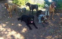 Happy dogs ❤️😍 •_•_•__#dog #dogsofinsta