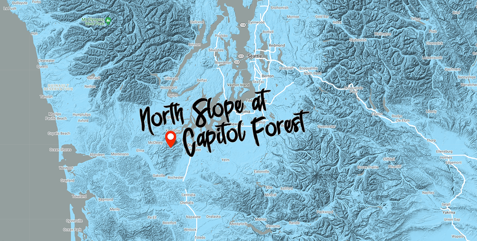 capitolForest.png