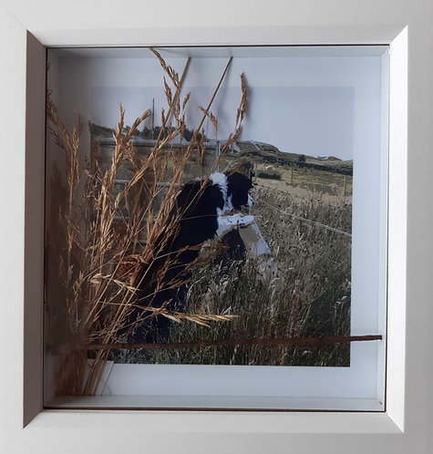 Dog at Croft gate