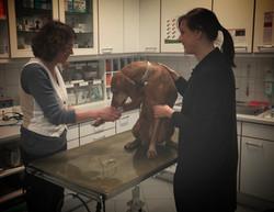 Tierarztpraxis Renate Diestel