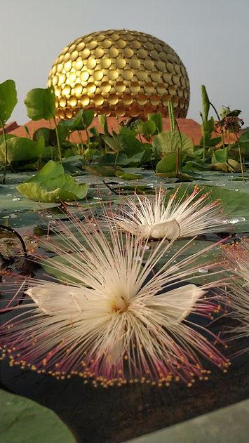 Beside Auroville Charter.jpg