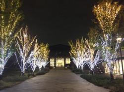 葛飾キャンパスのライトアップ