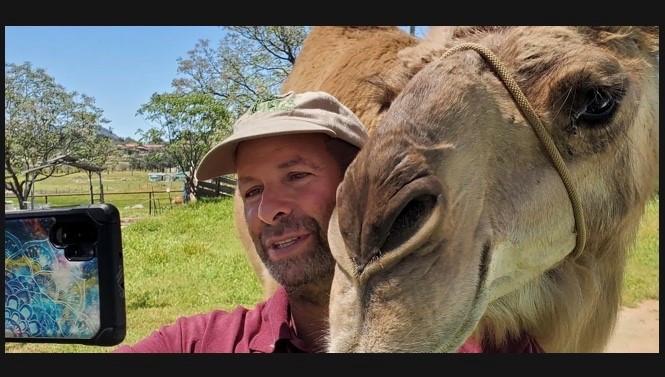 Camels2.jpg