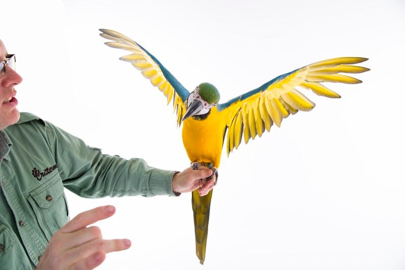 2016 Macaw (800x533).jpg
