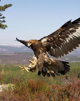 flying_meat_eaters.jpg