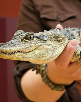 Reptiles 101.jpg