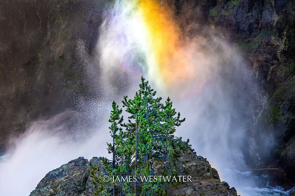 Ethereal Moment, Yellowstone National Park, Wyoming
