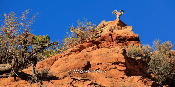 Under a Watchful Eye, Zion National Park, Utah
