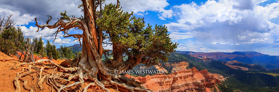 Standing Guard, The Twisted Forest, Utah